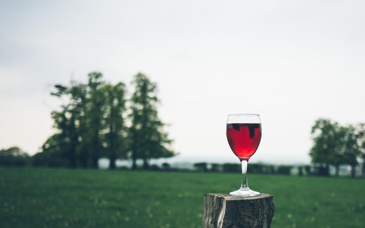 bölcsek bora1